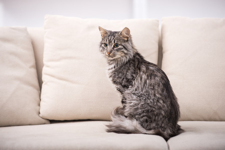 A Landlord's Guide to Pet Deposits, Fees, and Rents